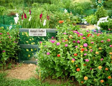 Nashua Community Garden Aug 2020